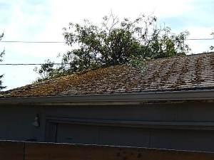 damage- roof moss-garage